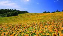 夏のイメージ(北海道)